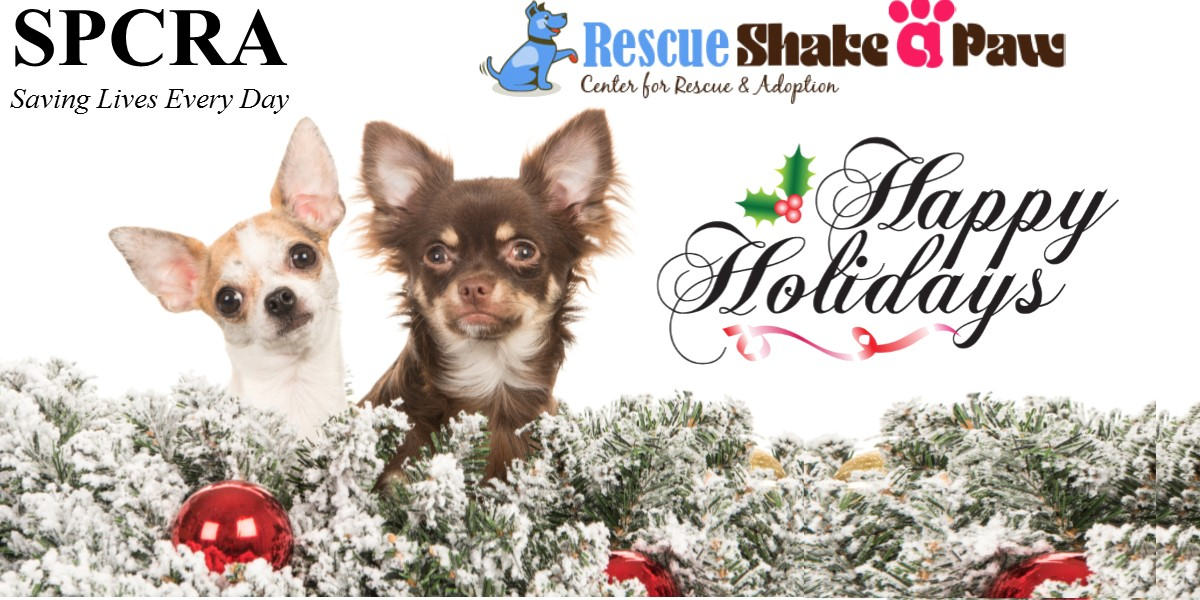 Visits Shake A Paw Rescue and Give the Gift of Love for the Holidays!